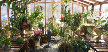 What to Look for When Choosing a Greenhouse