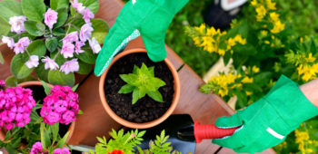 Greenhouse Tips for Beginners