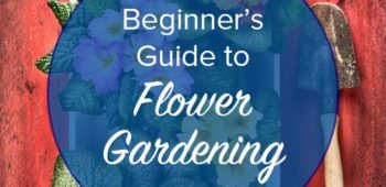 Beginner Tips for Flower Gardening