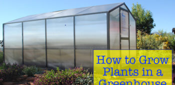 How to Grow Plants in a Greenhouse
