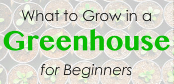 What to Grow in a Greenhouse for Beginners