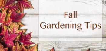 Seasonal Gardening Tips for Fall